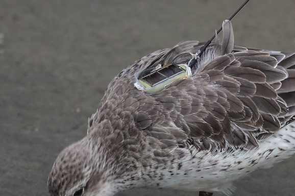 Thinking like a bird
